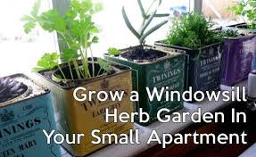 Window Sill Herb Garden Designs Grow A Windowsill Herb Garden In Your Small Apartment Rentprep