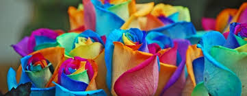 rainbow roses are they real love the garden