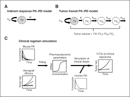 antitumor activity of targeted and cytotoxic agents in murine