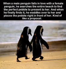 Cute Penguin Meme - images funny cute penguin