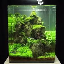 Aquascaping Shop One Day I Will Get Myself Some Shrimps As Pets Aquarium
