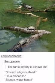 Alligator Meme - the best alligator memes memedroid