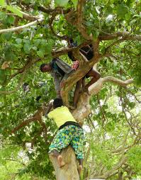 climbing trees mybrightlife