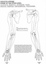bone anatomy of upper extremity appendicular skeleton human