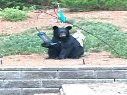 suwanee resident reports fifth gwinnett bear sighting this summer