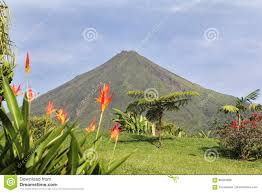 volcano flowers arenal volcano with flowers stock photo image of flowers