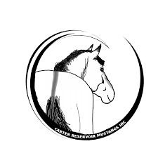 mustang horse drawing namar mustangs contact links