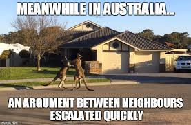 Aussie Memes - 45 most funny kangaroo meme photos and images