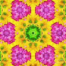 crazy daises spring flowers bouquet gerber daisy wanna be