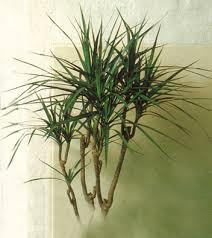 plante d駱olluante chambre plante dépolluante plantes dépolluantes plantes
