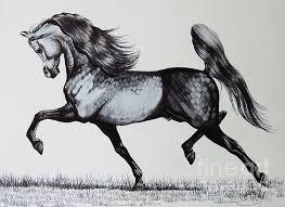spirited arabian horse drawing spirited arabian horse