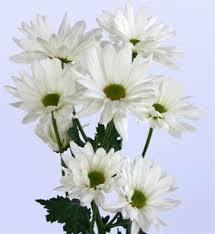 wholesale flowers online online wholesale bulk discount white poms flowers