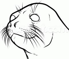 how to draw a seal head step by step sea animals animals free
