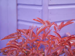 parma violet ombre dream shed diy nikki mcwilliams