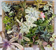 succulents meaning succulent living frame update cassidy tuttle photography