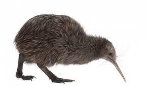 what animals live in australia and oceania worldatlas com