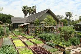 this highly productive city farm is widely considered a successful