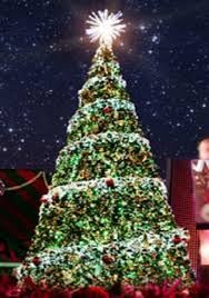 the best place to buy live christmas trees in temple texas