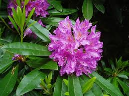Flowers Of The Month List - floral emblem wikipedia