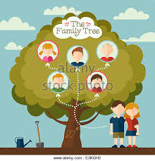 family tree genealogy illustration stock photos family tree