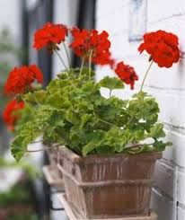 Indoor Flower Plants Add Some Color 5 Cheery Easy To Grow Indoor Flowering Plants