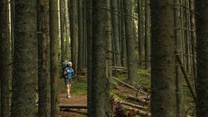 in the woods could you survive being lost in the woods mnn nature
