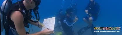 padi instructor development course idc the complete package that
