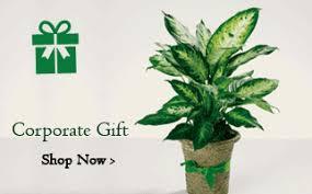 buy plants seeds and tree online india u0027s biggest nursery garden