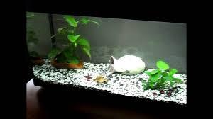 ghiaia per acquari allestimento acquario parte 1
