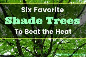 six favorite shade trees to beat the heat western garden centers
