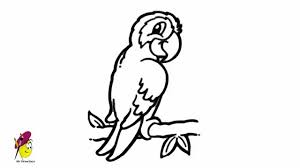 parrot birds animals easy drawing draw parrot