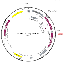 Map Qu Addgene V2 Mesa 35f Tev