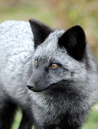 7 of the most beautiful fox species in the world bored panda