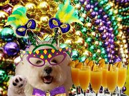 mardi gras jester ribbon dog 972 best mardi gras with the dogs images on pets