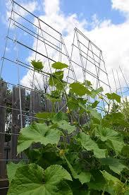 Vertical Garden Trellis - heavy duty trellis system modular wire trellis systems better