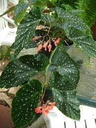 garden plants darxxidecom