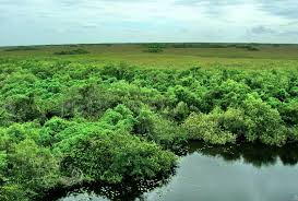 misc states wetlands united everglades florida cool wallpapers