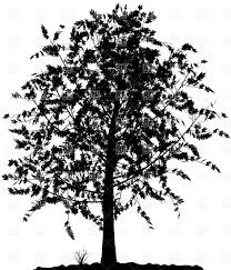 high detailed tree silhouette on white background vector clipart