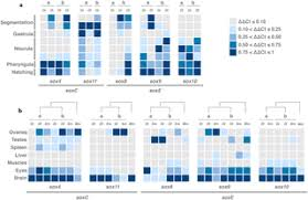 expansion by whole genome duplication and evolution of the sox
