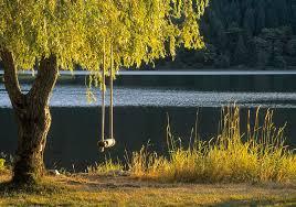 tree swing at lake photograph by darwin wiggett