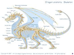 anatomy of reptiles images learn human anatomy image
