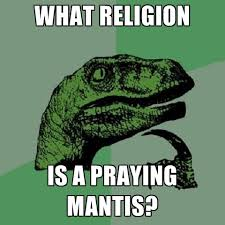 Mantis Meme - what religion is a praying mantis create meme