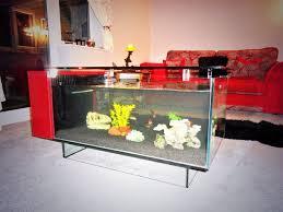Home Aquarium by Fish Tank Longhorn Cowfish In Saltwater Fish Tank Home Aquarium