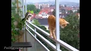 Stupid Animal Memes - stupid cats fails youtube