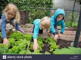 Small Vegetable Garden by Small Vegetable Garden Stock Photos U0026 Small Vegetable Garden Stock