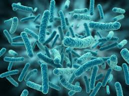 shapeshifting shapeshifting bacteria scientists discover how e coli in space