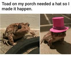 Horny Toad Meme - toad on my porch needed a hat so i made it happen toad meme on me me