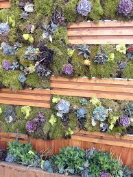 2456 best vertical succulent gardens images on pinterest