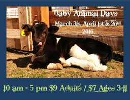 thanksgiving point farm country utah baby animal days guide adventurin u0027 the salt project