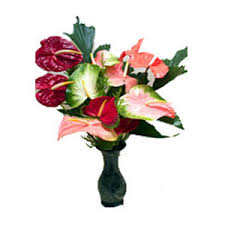 flowers to india send flower to india anthurium flowers to india deliver flowers to